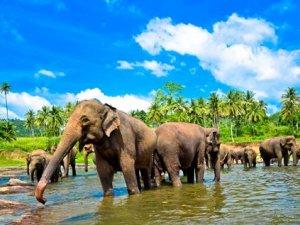 17 daagse fly drive Parels van Sri Lanka